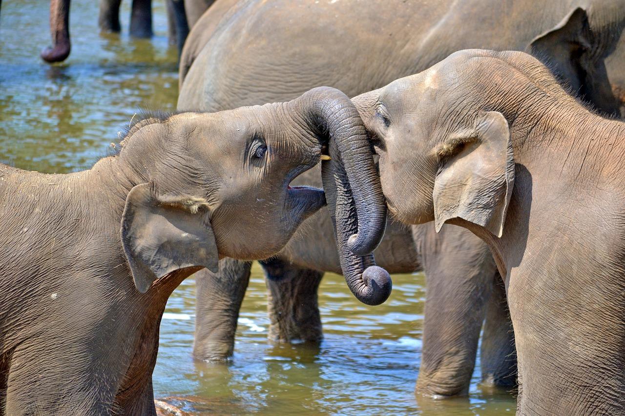 Sri Lanka ist ein super Reiseziel für November und man kann Elefanten in freier Wildbahn sehen.