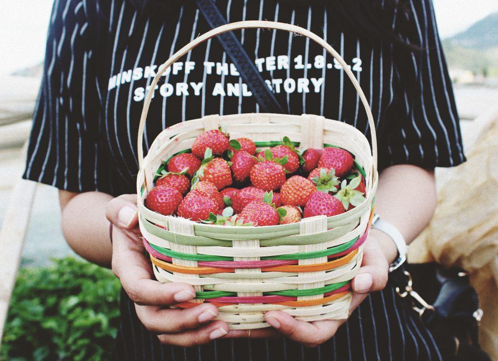 Erdbeeren pflücken im Frühling.