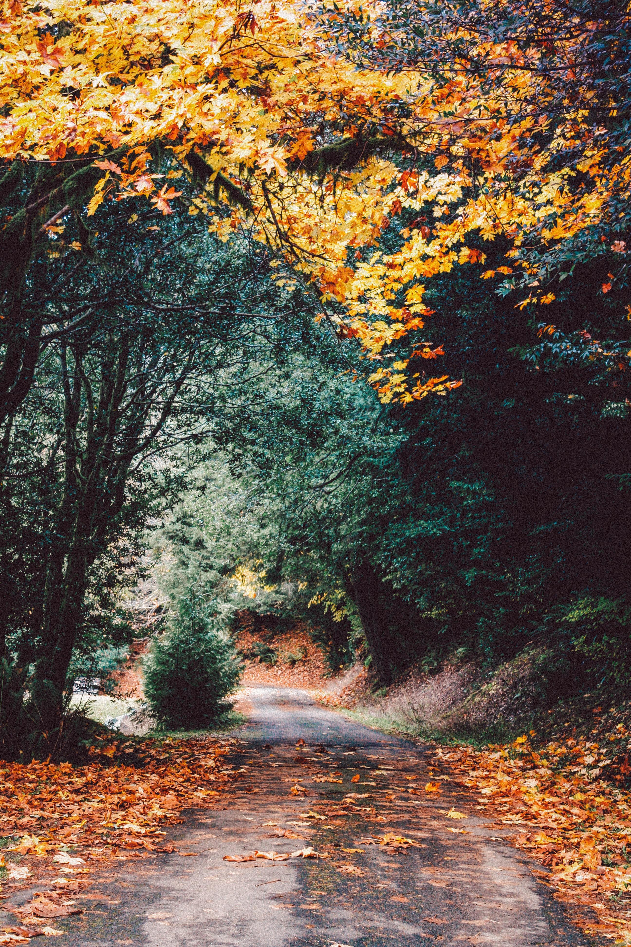 Eine Wanderung im Herbst in der Fränkischen Schweiz ist perfekt.