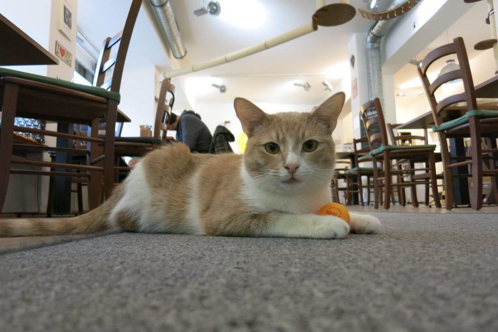 Im Katzentempel könnt ihr Katzen streicheln und veganen Kuchen essen.
